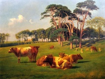 Cattle and sheep in pasture, 1907