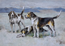 Welsh Hounds from the packs of Lieutenant Buckley & The Hon. H.C. Wynn